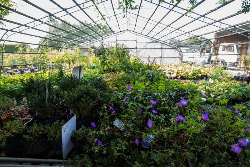 Baumschule-Busch-Blumen