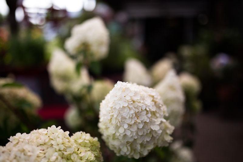 Baumschulen-Busch-Blumen
