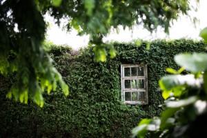Baumschulen-Busch-Fenster
